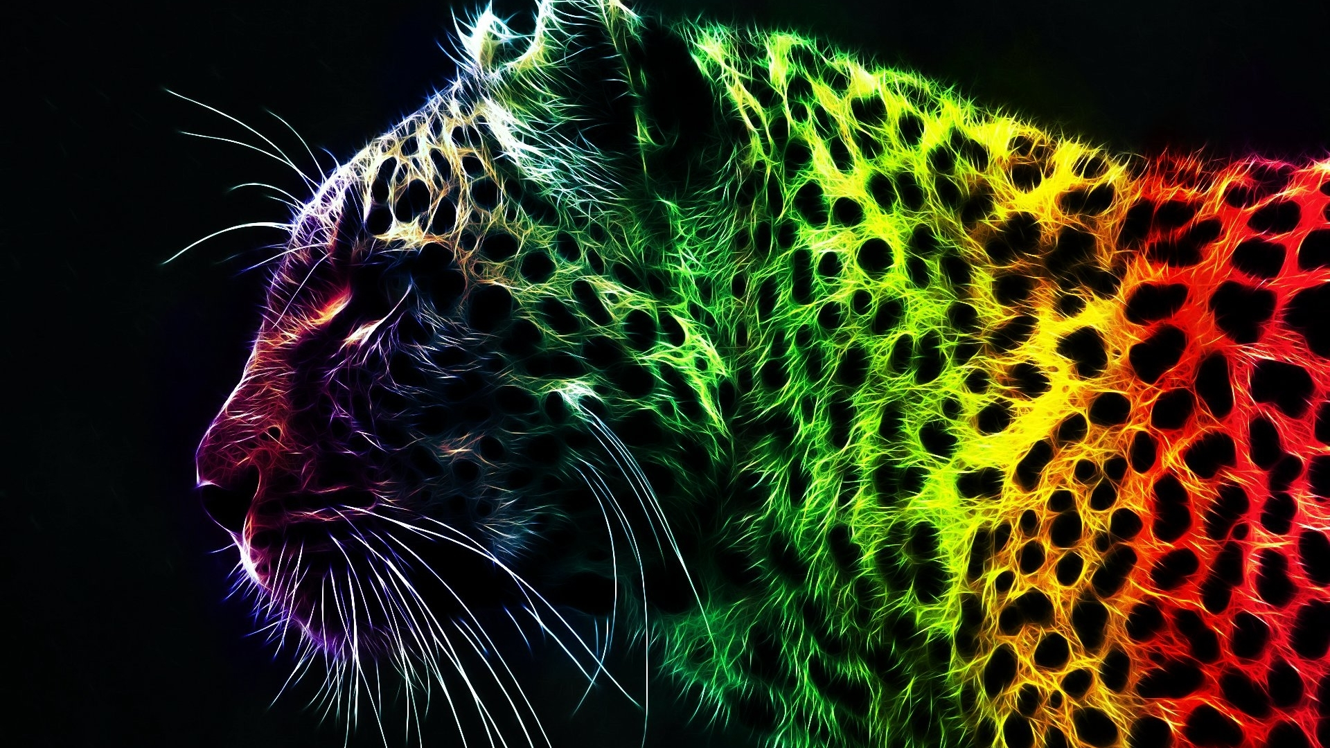 Download Animal Abstract Art Hd Wallpaper Full HD Wallpapers 1920x1080