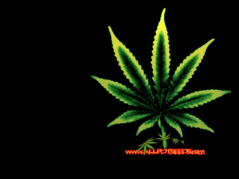 cannabis wallpaper marijuana wallpapers 800x600