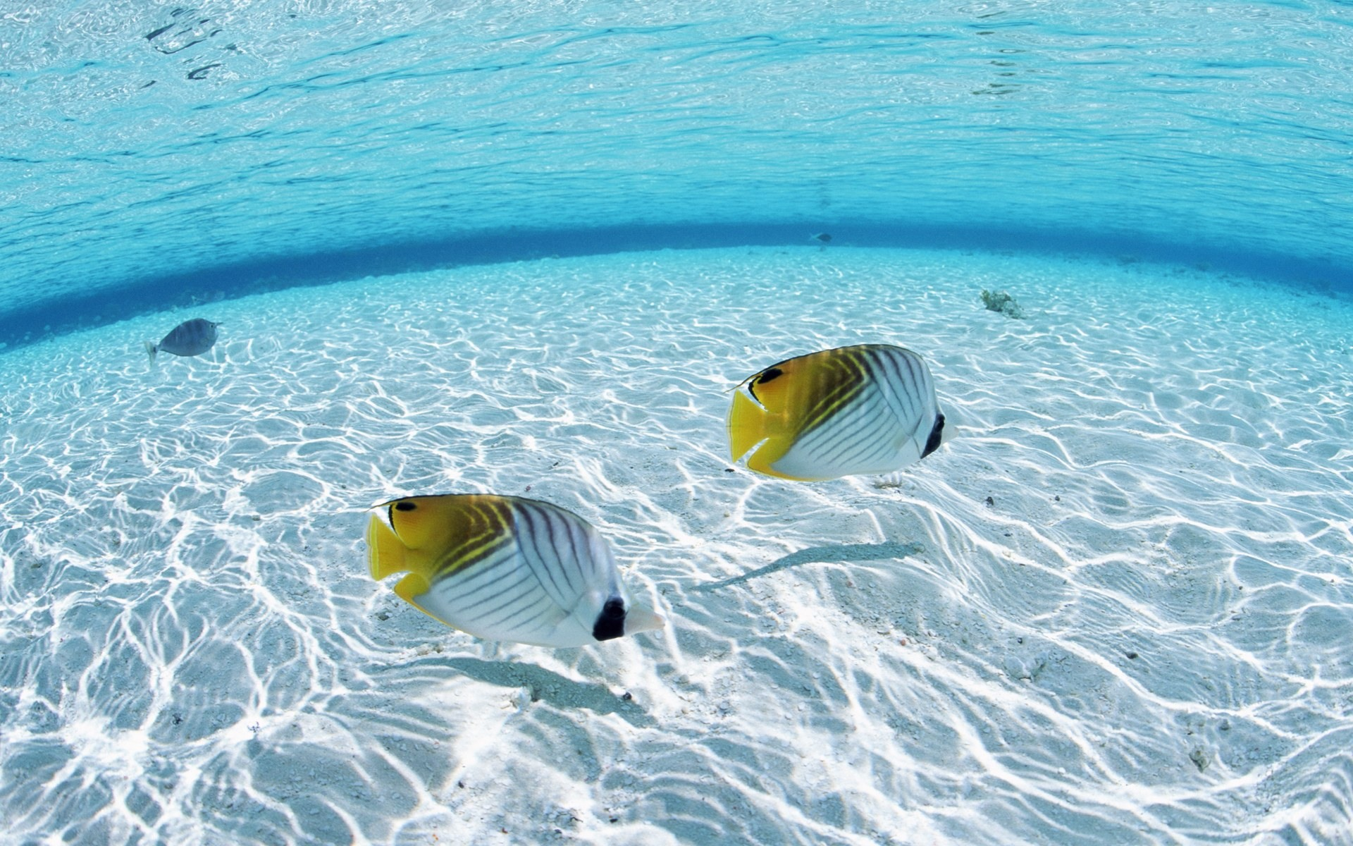 Fish in the Ocean wallpaper 1920x1200