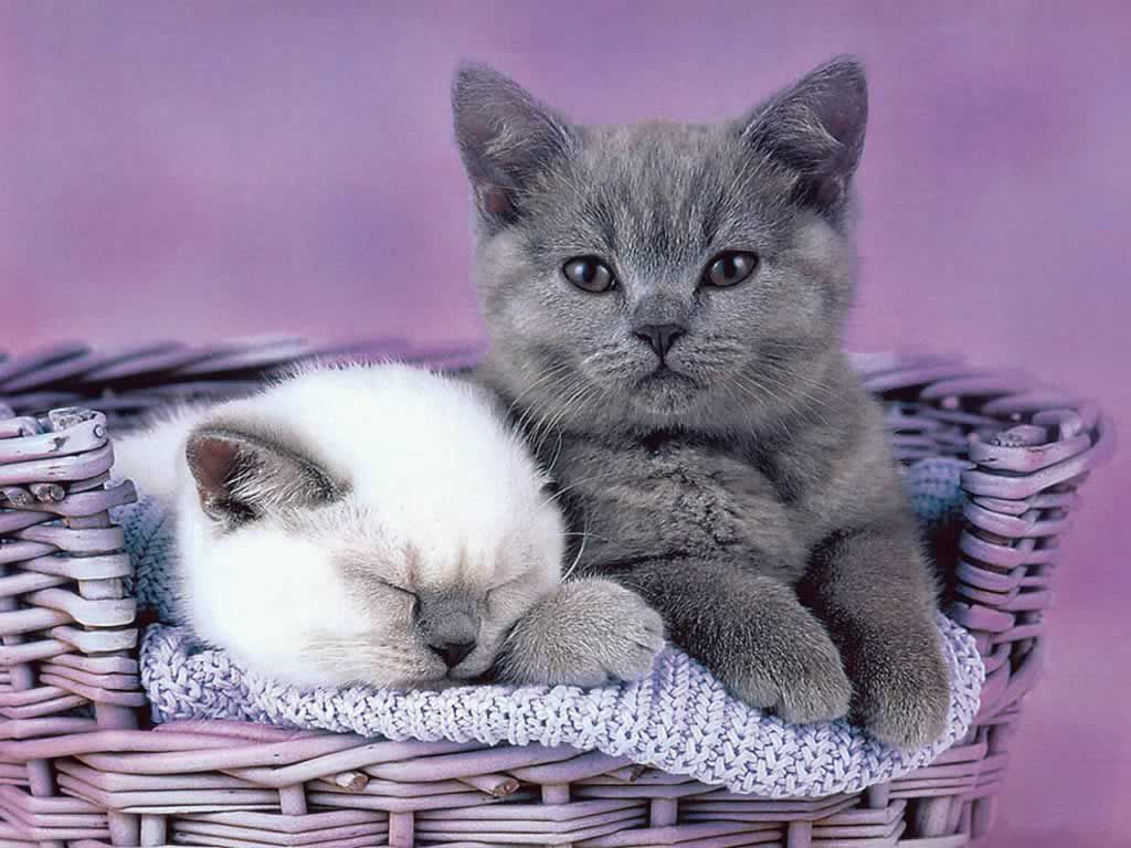 Funny And Cute Cat Pictures 21 Background: Funny Kitten Wallpaper And Screensavers
