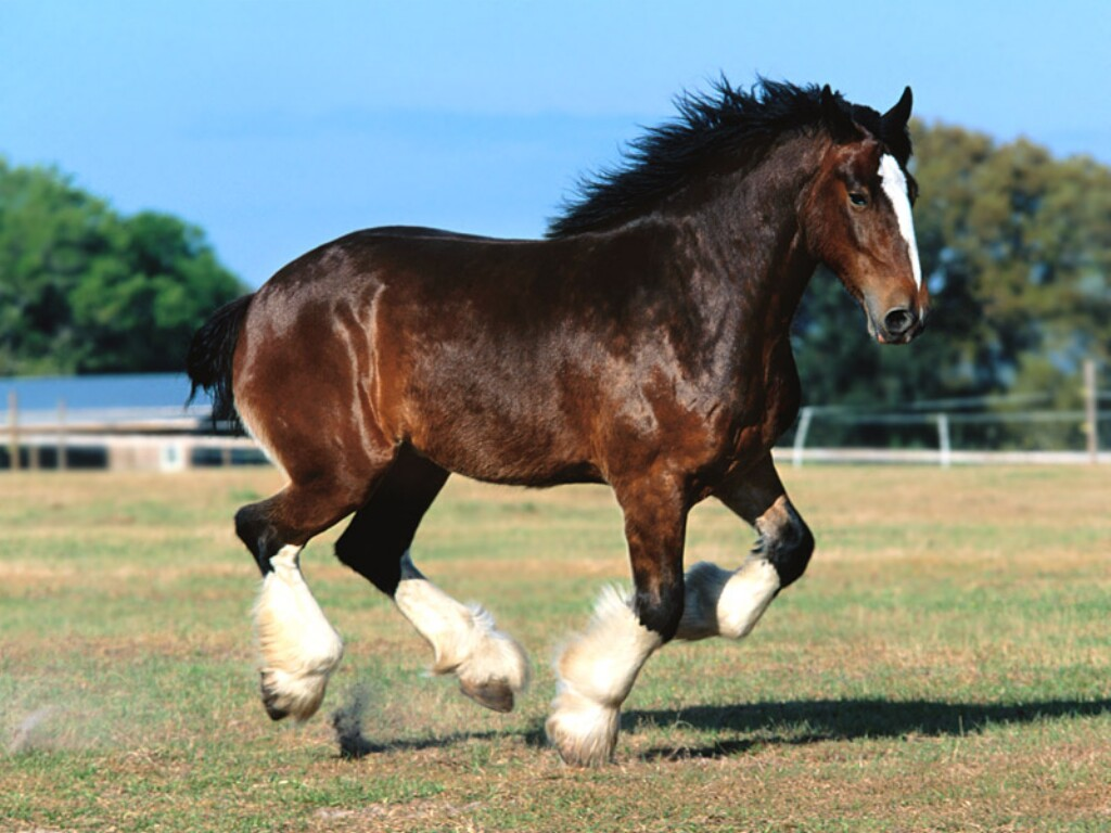 Horse Screensavers And Wallpapers 1024x768