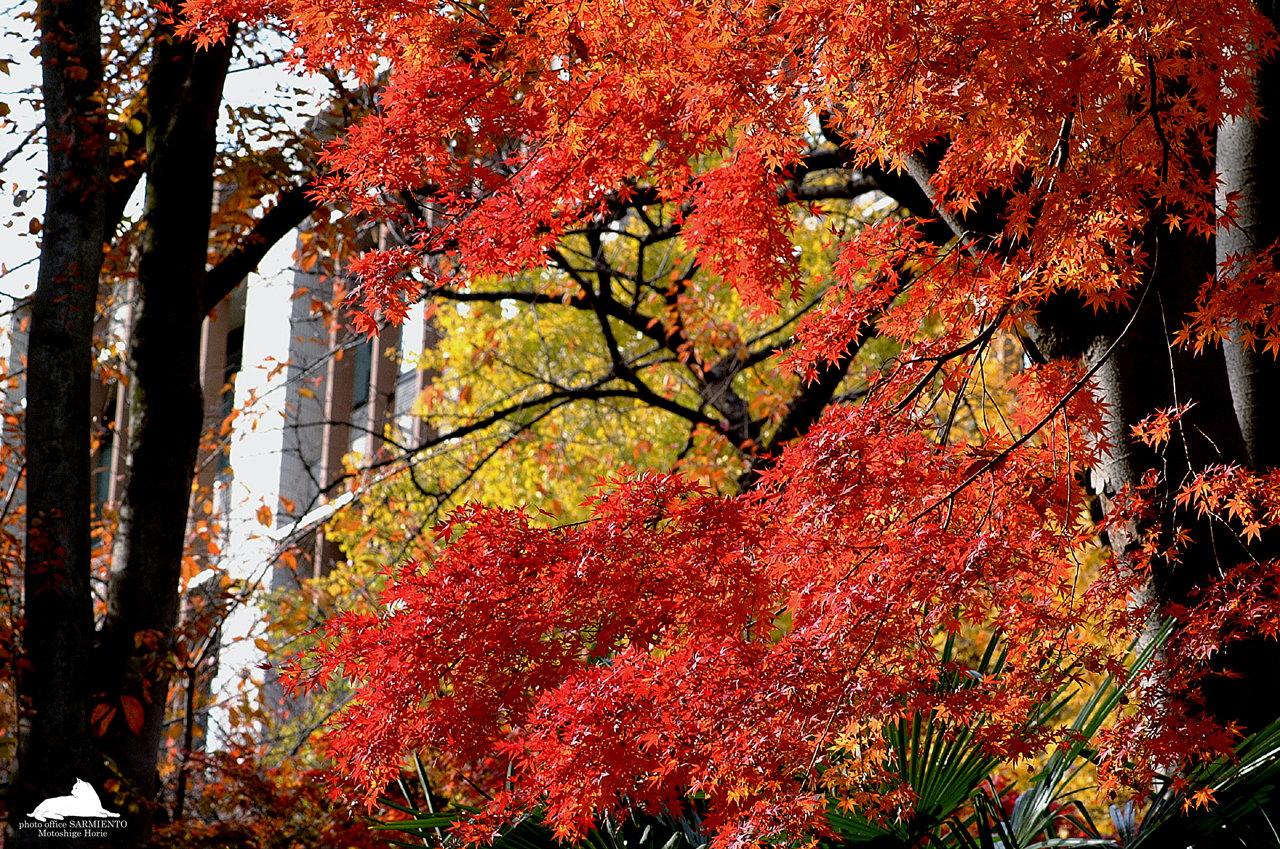 Fall Foliage Wallpaper - Desktop Backgrounds