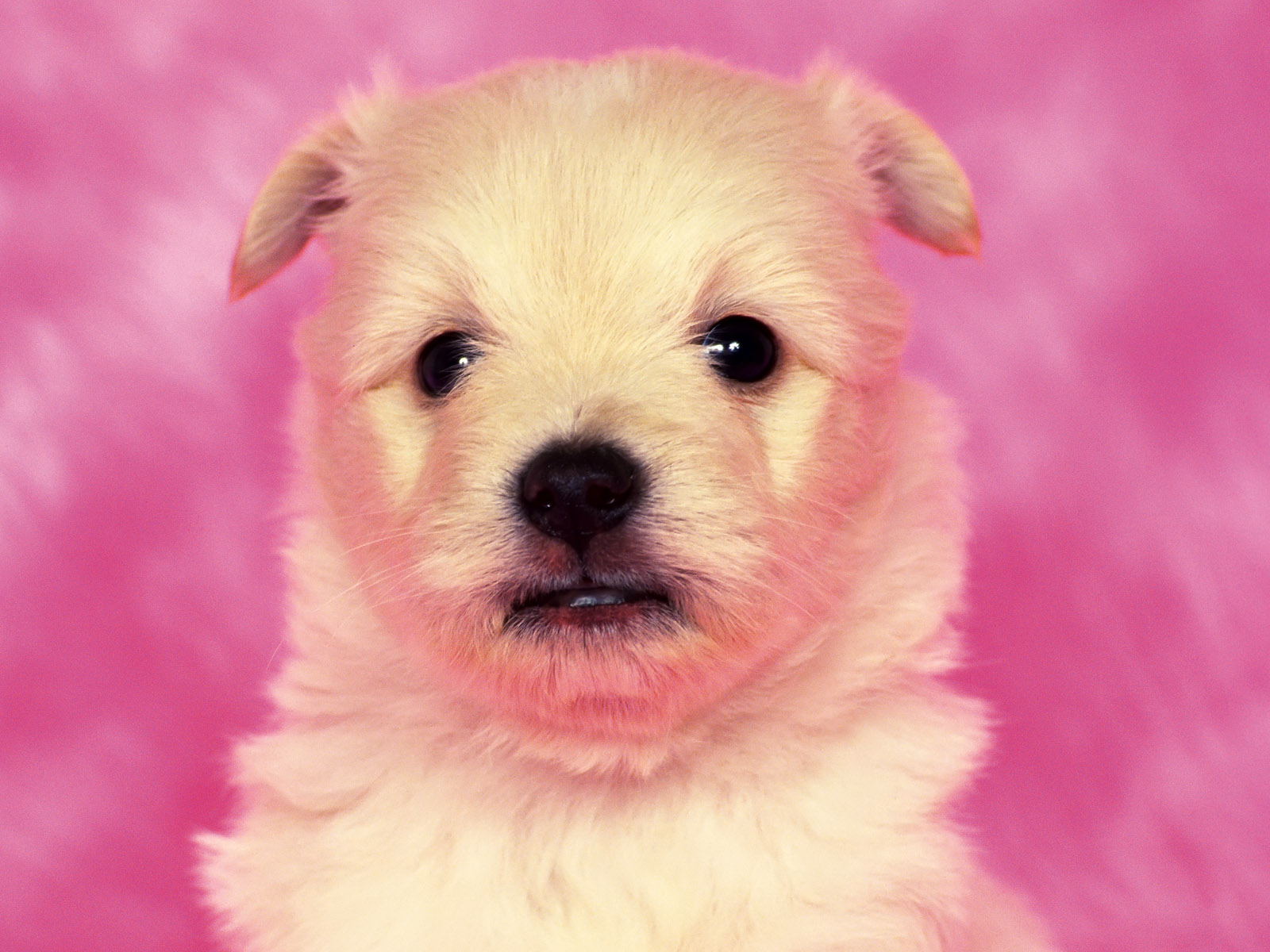 Cute Puppy Dog Wallpaper Wallpaper ME 1600x1200