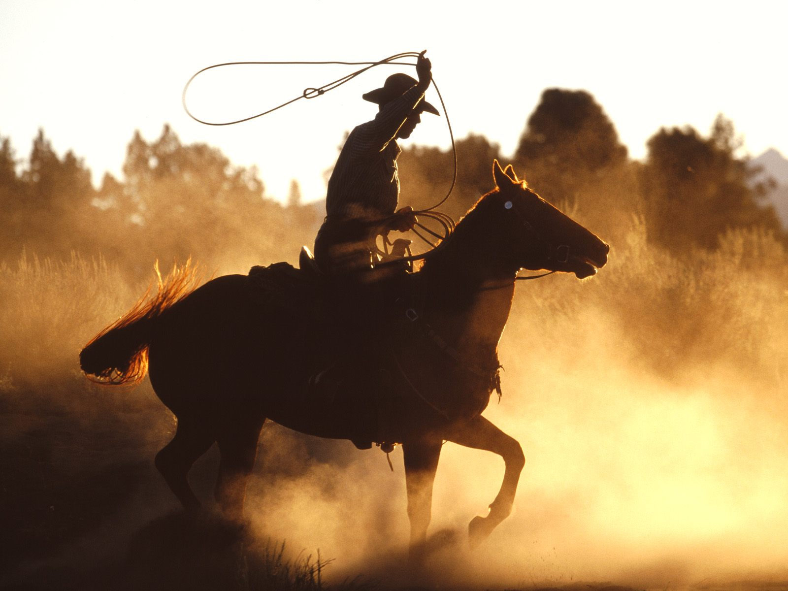 Western Glory   Animals Wallpaper Image with Horses 1600x1200