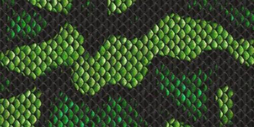 47 Snake Print Wallpaper On Wallpapersafari
