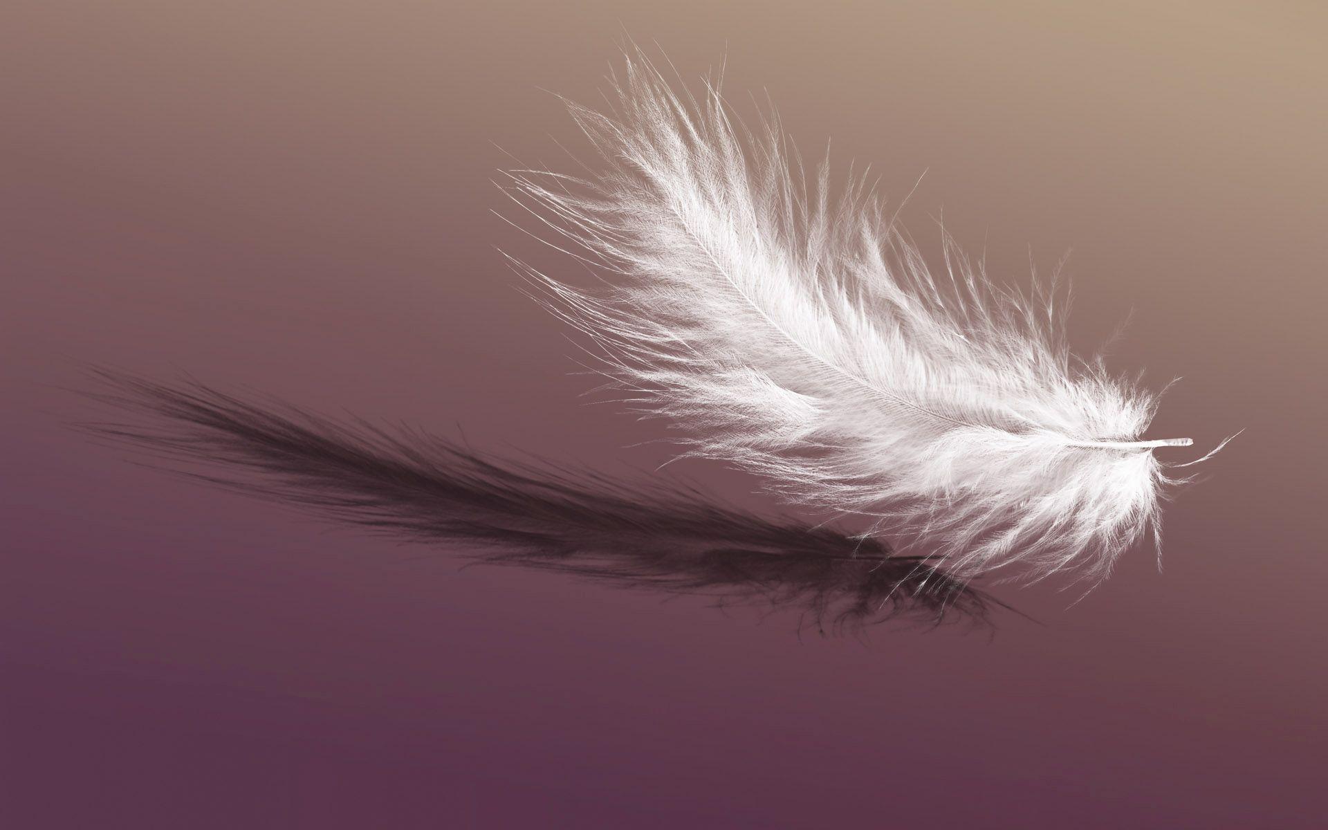 [39+] Feathers Falling Wallpaper on WallpaperSafari