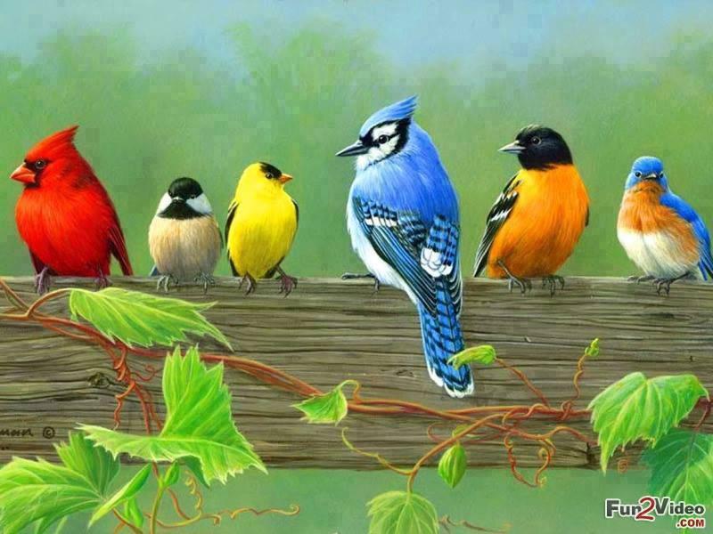 Beautiful Birds Wallpaper For Desktop Download Of Cool Birds 800x600
