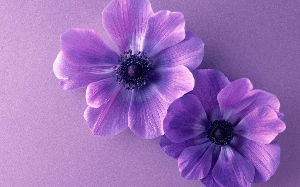 Free Download Light Purple Wallpapers Wallpaper Light Purple