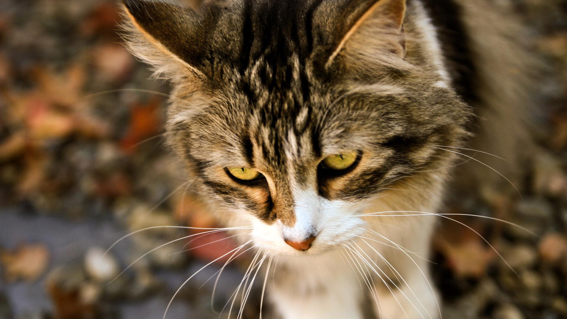cat looks like lenin
