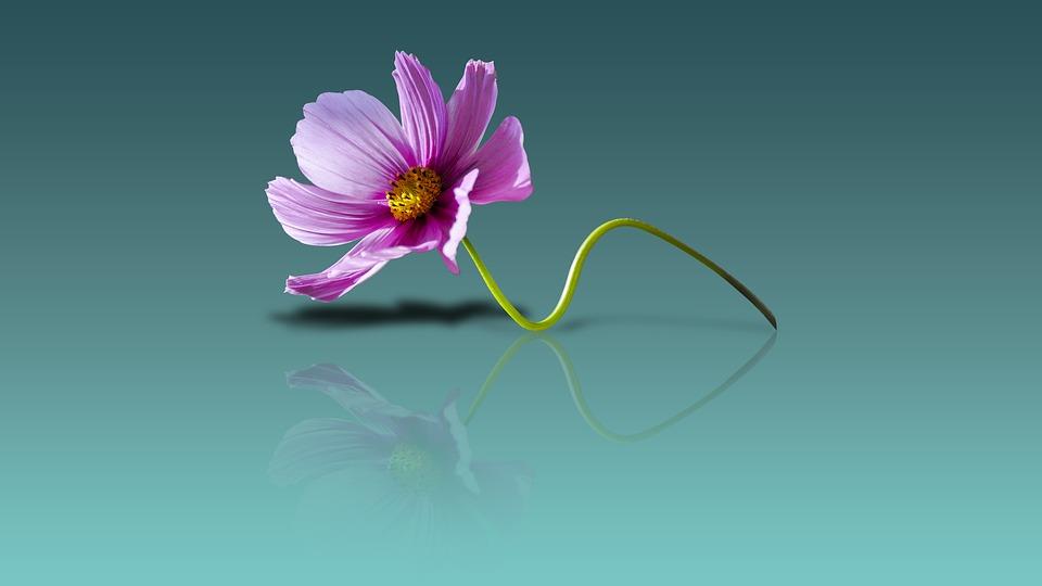 Beautiful Flowers Desktop Mobile Wallpaper Backgrounds 960x540