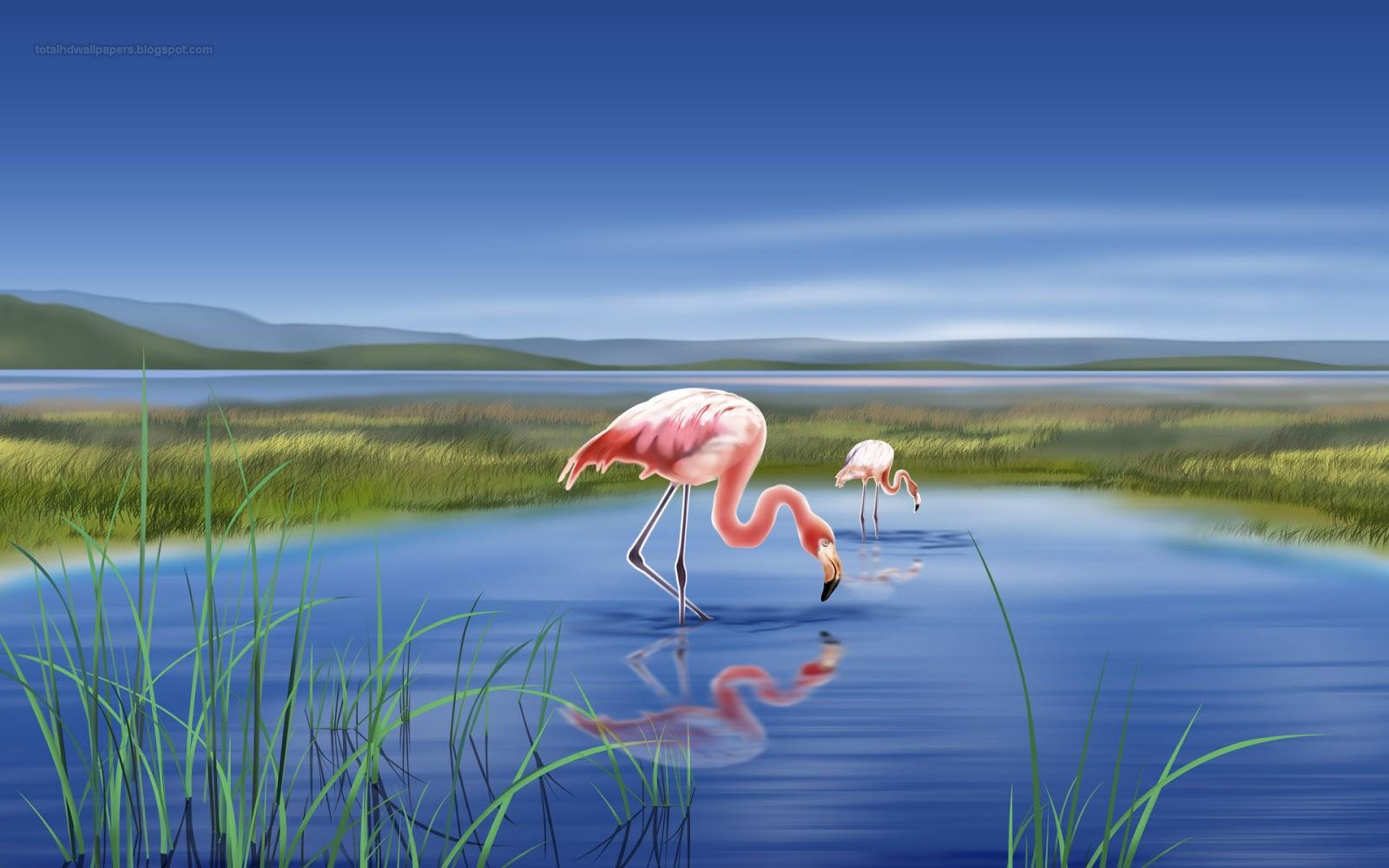 46+ Flamingo Desktop Wallpaper on WallpaperSafari