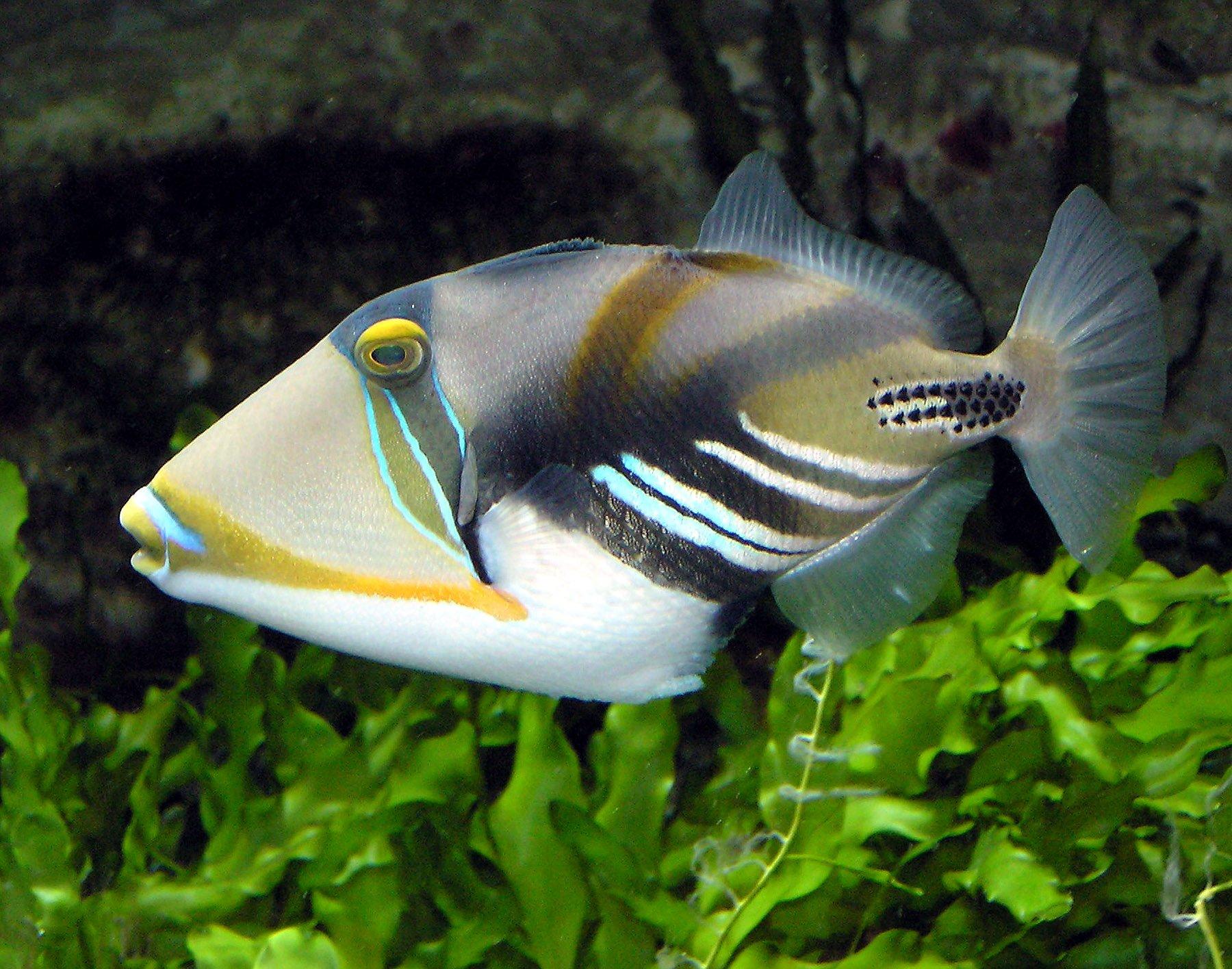 Beginner saltwater aquarium fish wallpapers download for pc Fish For 1800x1416