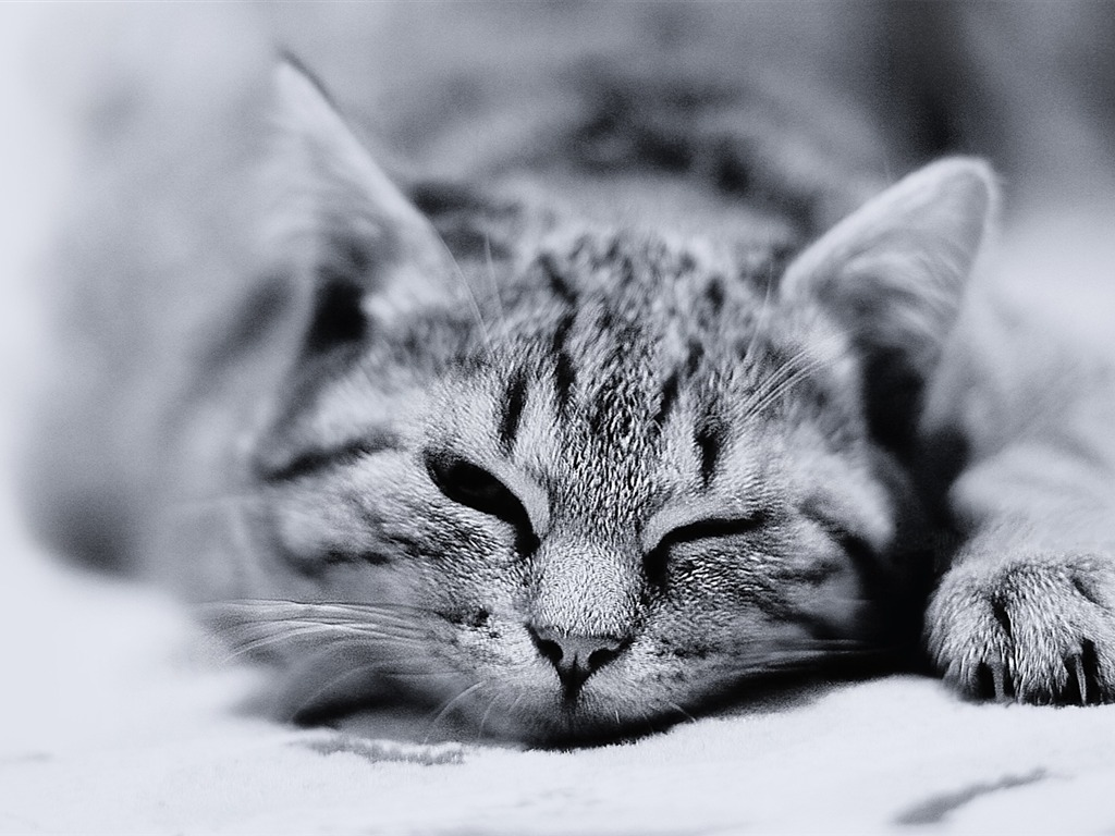 Cute Wallpapers Black And White