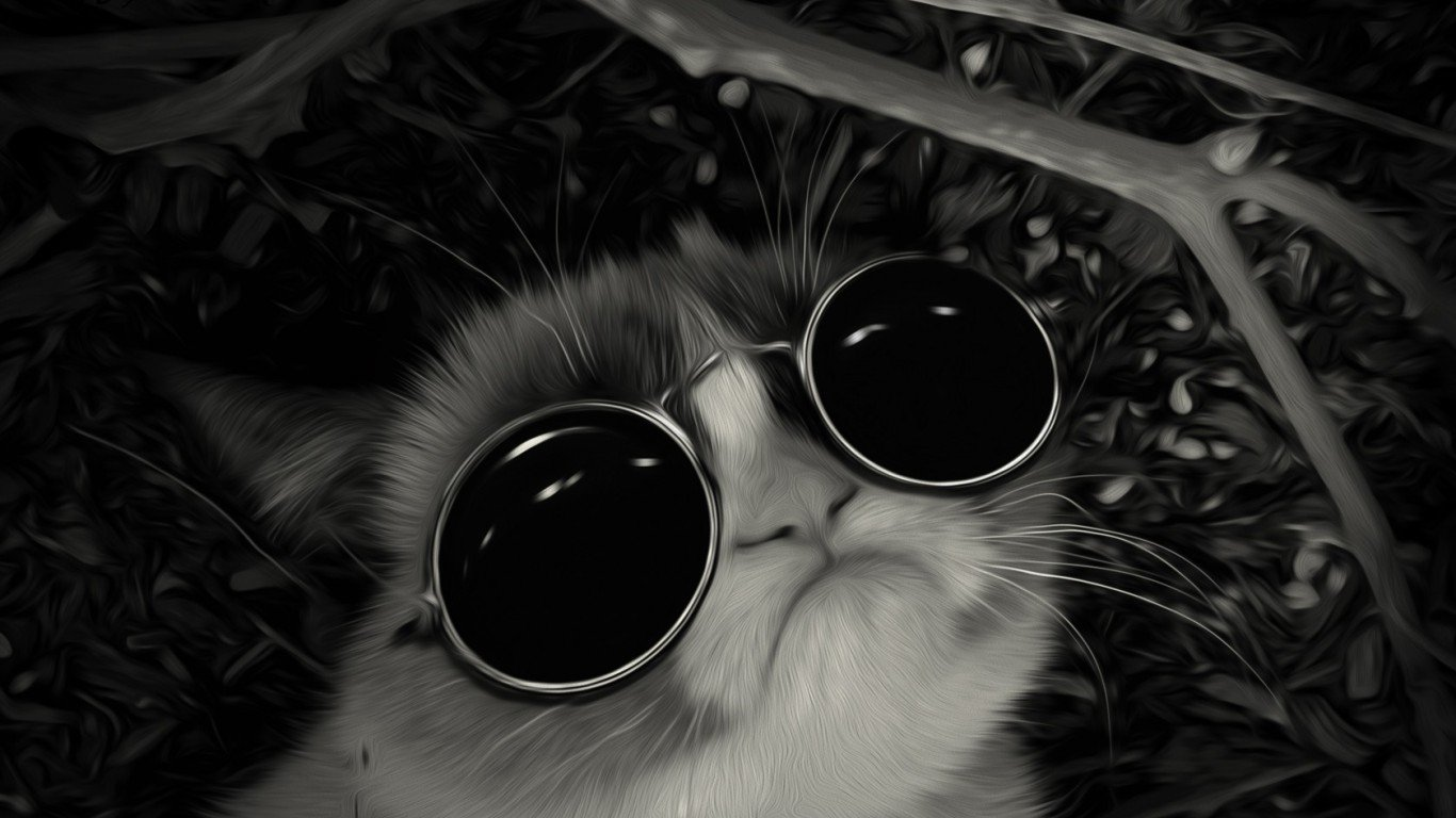 Cool Cat With Black Glasses Wallpaper Super Wallpapers 1366x768