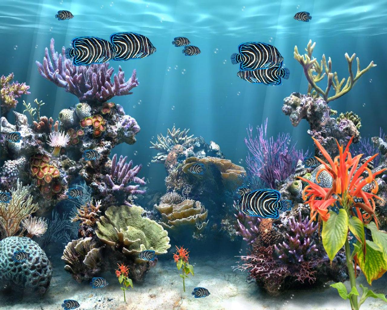 Coral reef screensavers wallpaper wallpapersafari for Reef fish tank