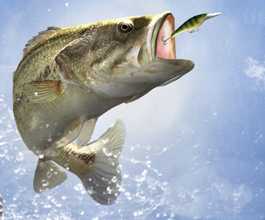 Bass Fishing Wallpaper Backgrounds 922x768