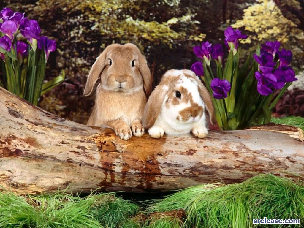 Download Rabbit Screen Saver Desktop Screen Savers Other 1024x768