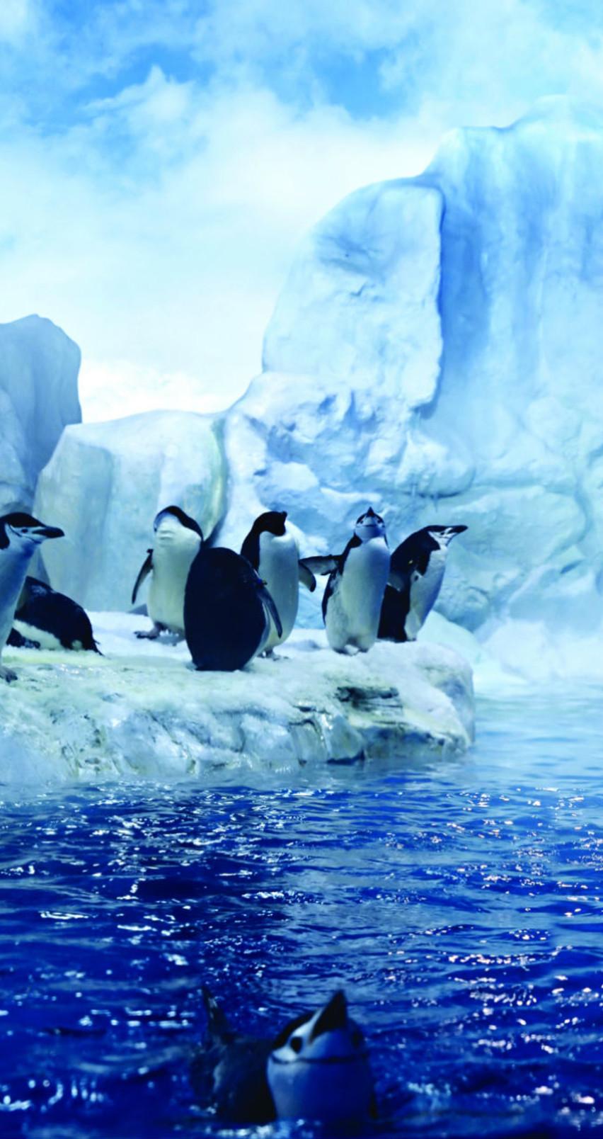 Penguins dancing in the Arctic   HD wallpaper 852x1608