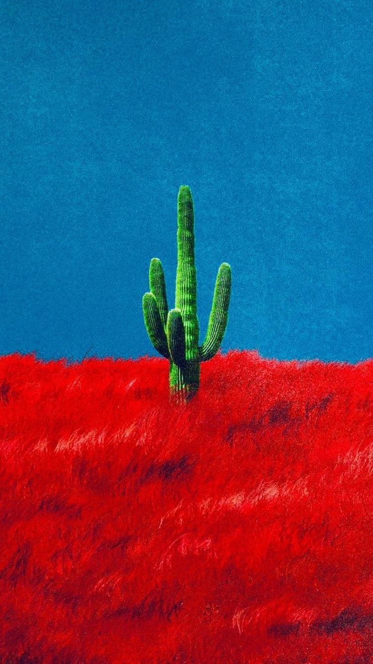 download Heres a 916 Cactus Wallpaper travisscott [787x1400 750x1334
