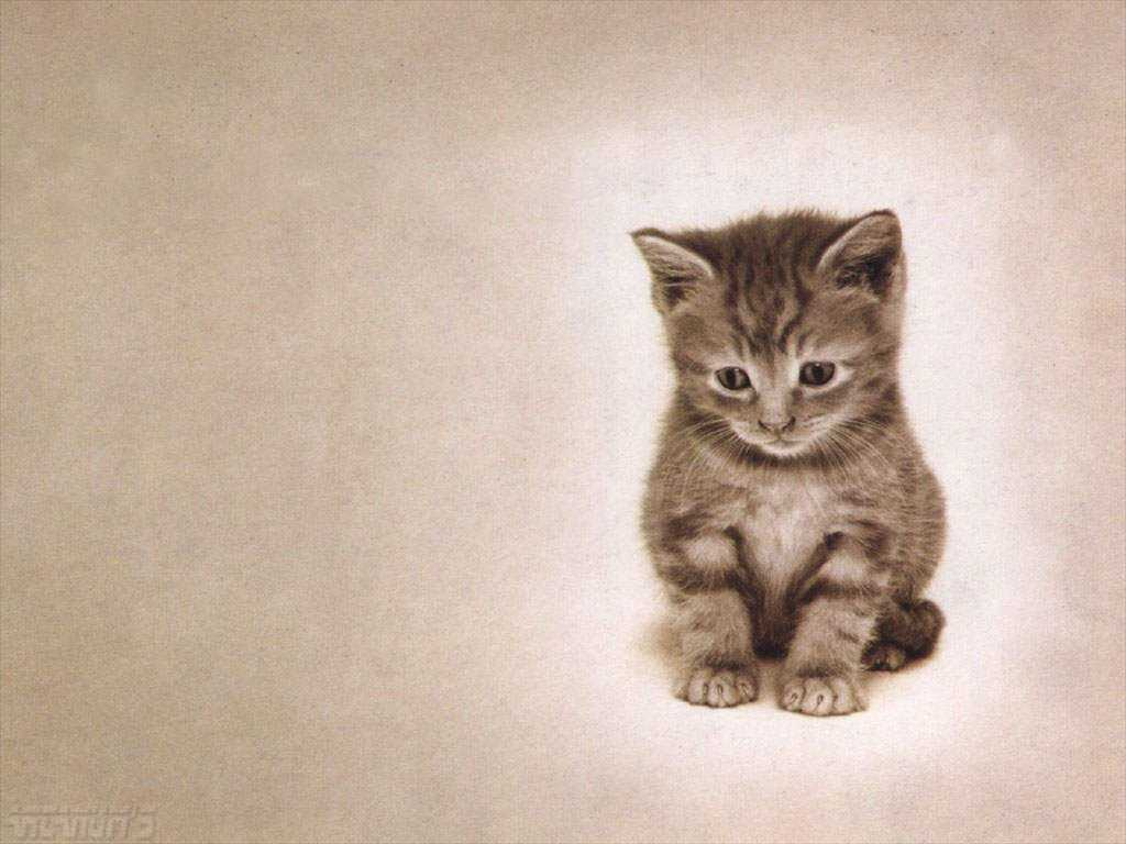 Download wallpaper Cute Kitten 1024x768