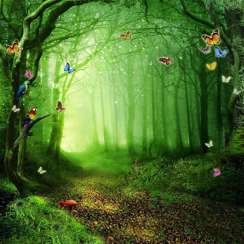 photo backdrop forest  6x8ft photo backdrop vinyl   Alice in 800x800
