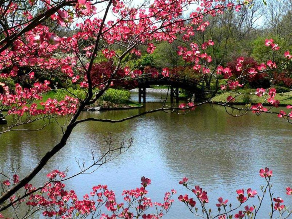Spring Desktop Themes Related Keywords amp Suggestions 1024x768