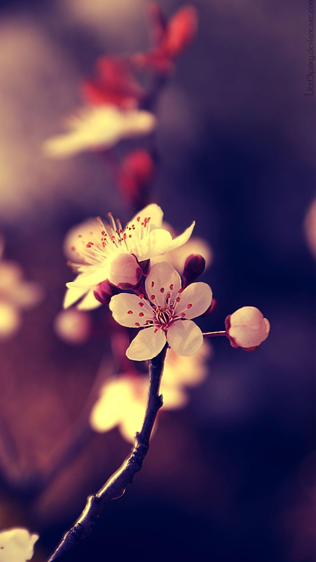 httpwwwvactualpaperscomgallerybeautiful flowers mobile hd 1080x1920