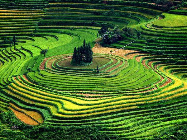 Vietnam Photos    National Geographic 600x450