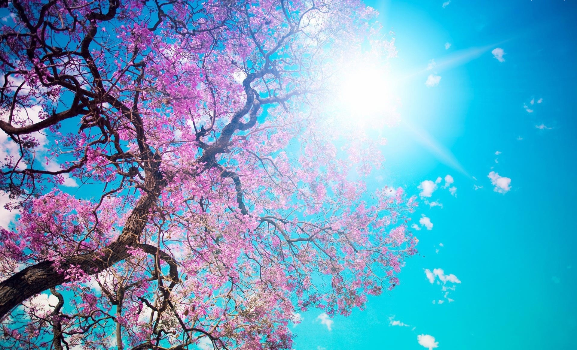 Pink On Spring Tree HD Wallpaper Nature Wallpapers 1920x1166