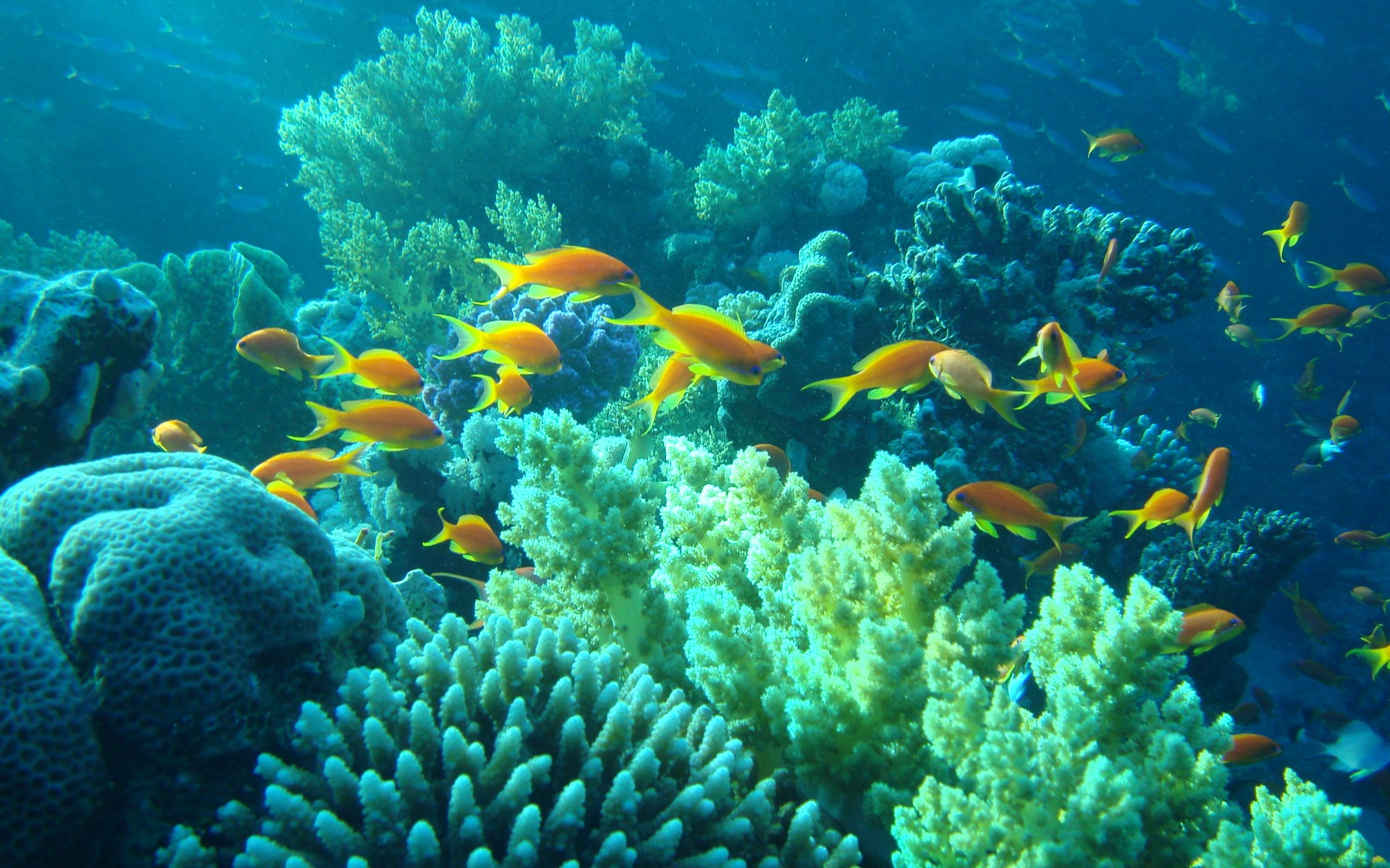 Underwater Egypt sea ocean fishes coral tropical wallpaper 1920x1200 1920x1200