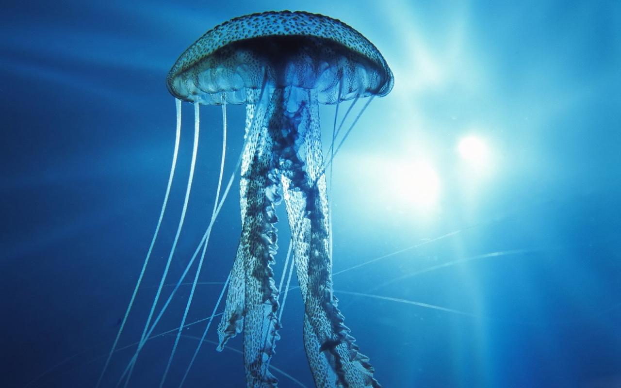 Deep Sea Underwater Wallpaper 1280x800