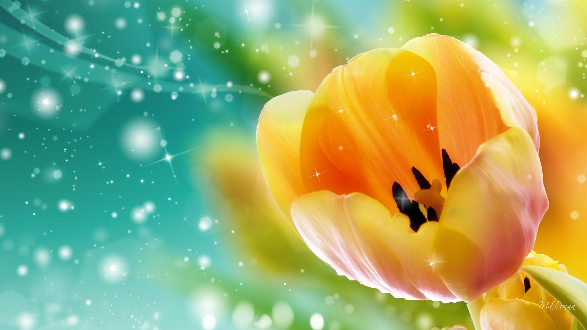 Tulip Wallpaper And Screensavers