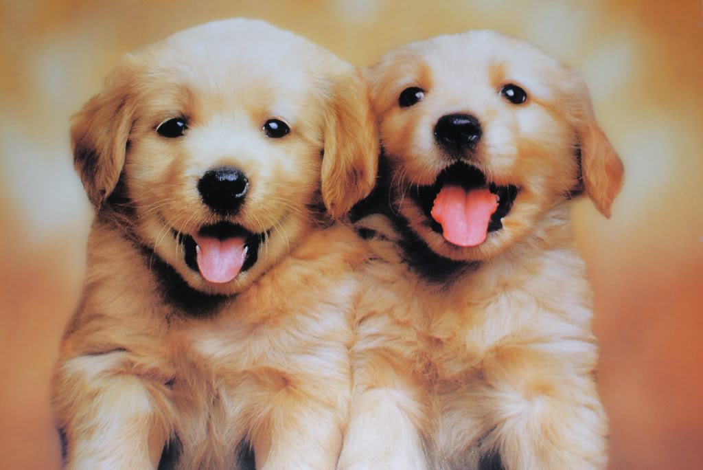 Download Cute Puppies Wallpaper For Desktop Dogs For Puppies 1024x684