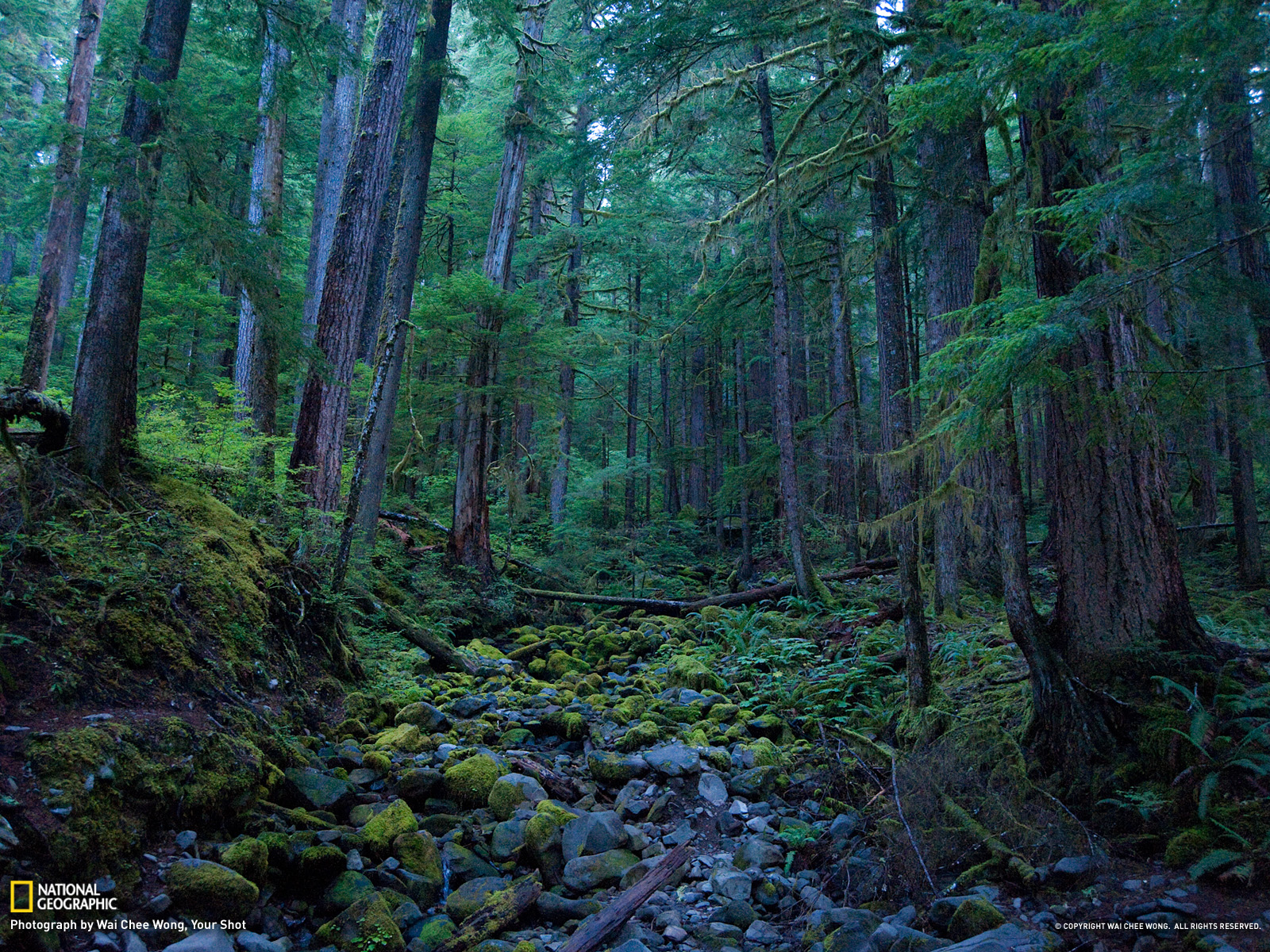 Olympic National Park Wallpaper   National Geographic Photo of the Day 1600x1200