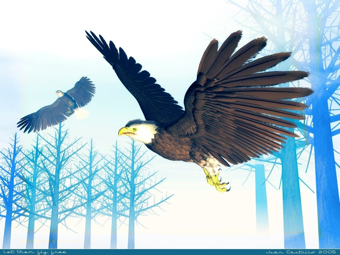 American Bald Eagle   Animals Wallpaper Image with Birds 1152x864
