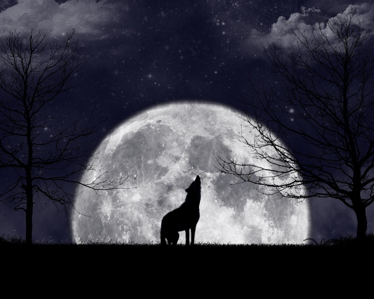 Картинки с волком на луну
