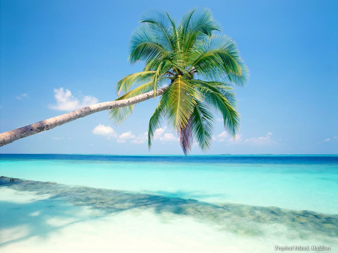 Caribbean Beach Wallpaper on this Beach Wallpaper Backgrounds website 1152x864