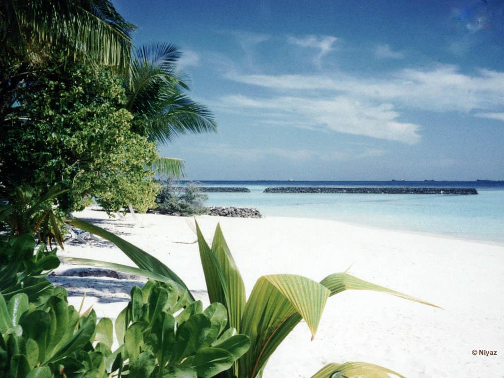 Free Tropical Beach Wallpaper