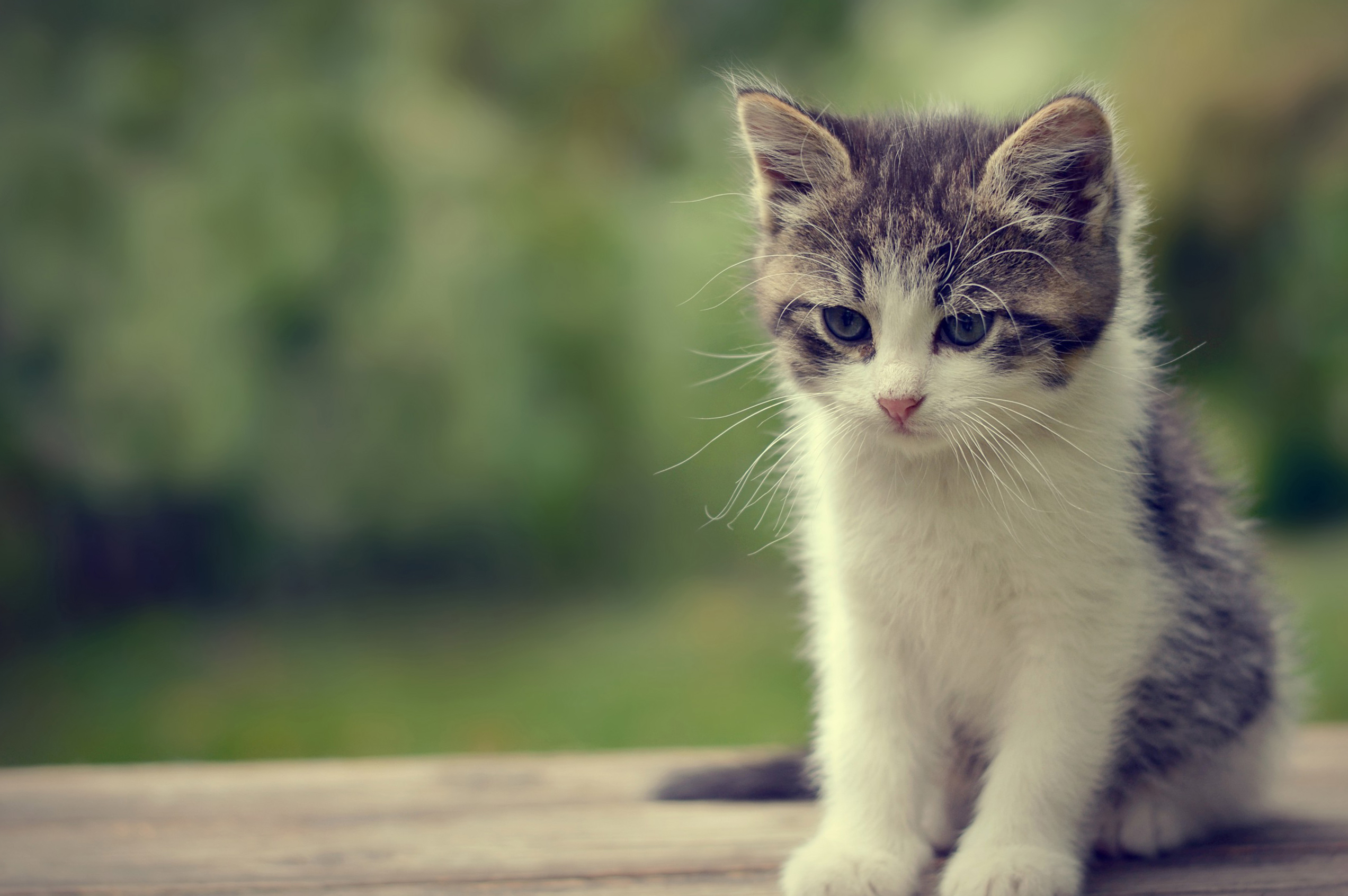 74 Cute Cat Backgrounds On Wallpapersafari