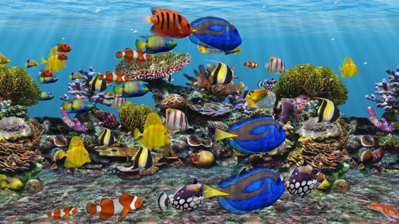 Fish aquarium screensaver - Akvaryum 3d Fish 3d Fish Aquarium Screensaver 3d Fish School Aquarium