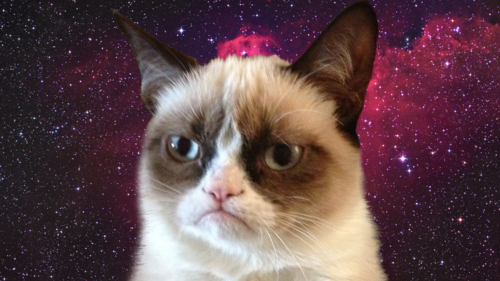 Galaxy Cat Backgrounds Tumblr Grumpy 500x281