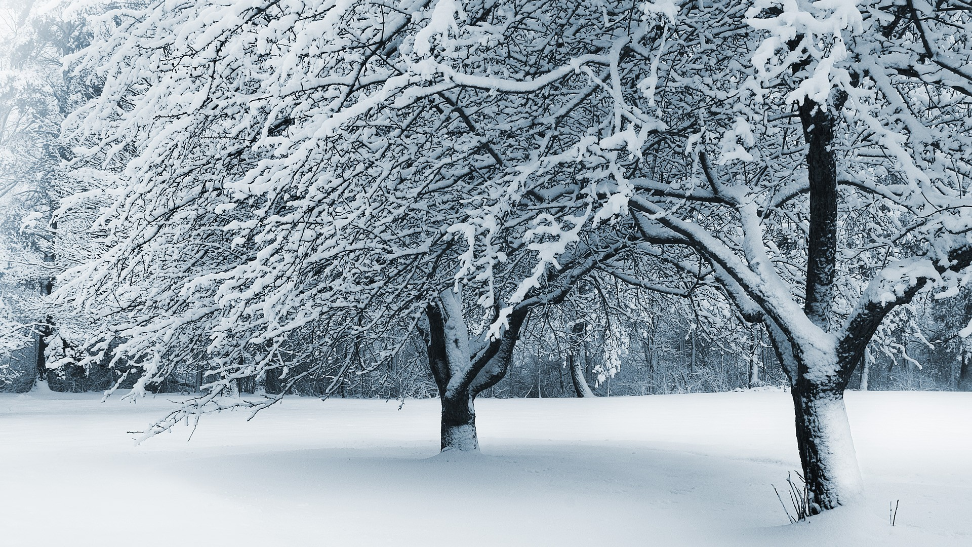 10 winter landscapes Cute wallpapers 1920x1080