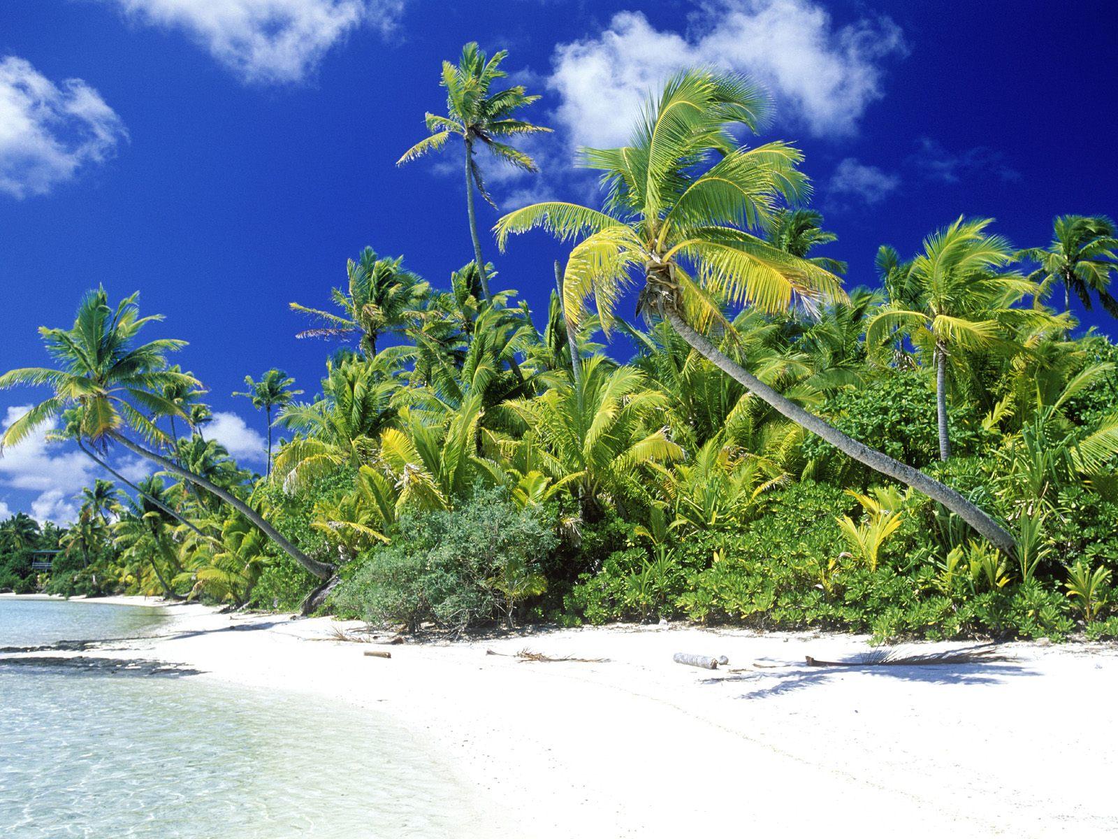 Wallpaper Of Beach Palm Beach With Pretty Palms Wallpaper 1600x1200