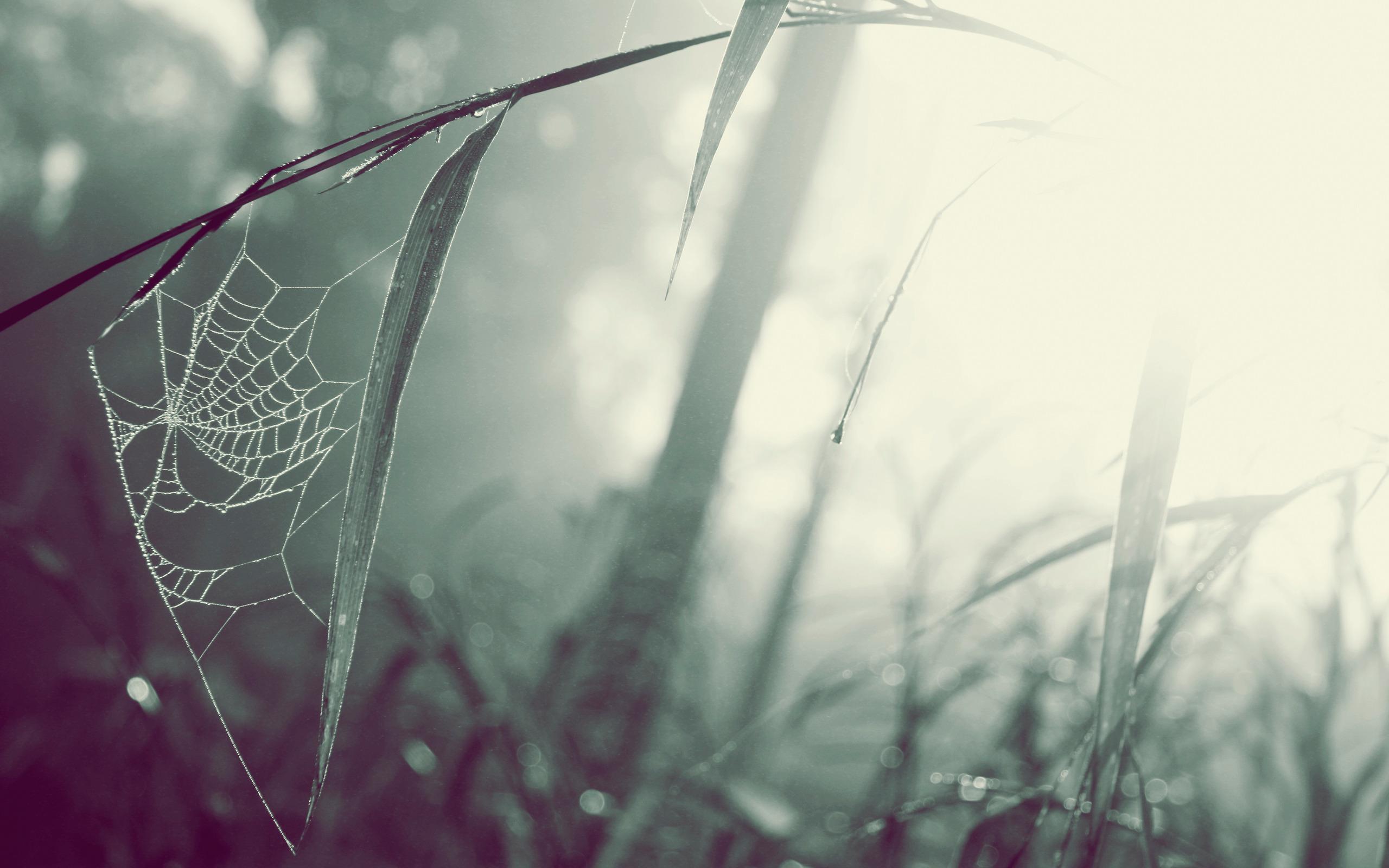Spider Web Wallpaper Desktop h892776 Photography HD 2560x1600