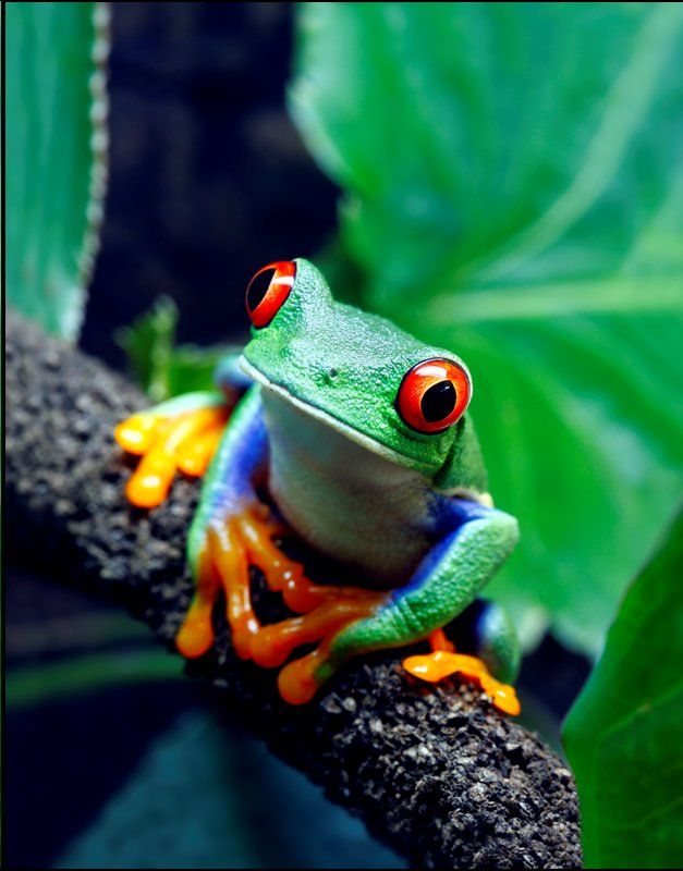 Community Store amazing animals insectsK Rainforest animals 627x800