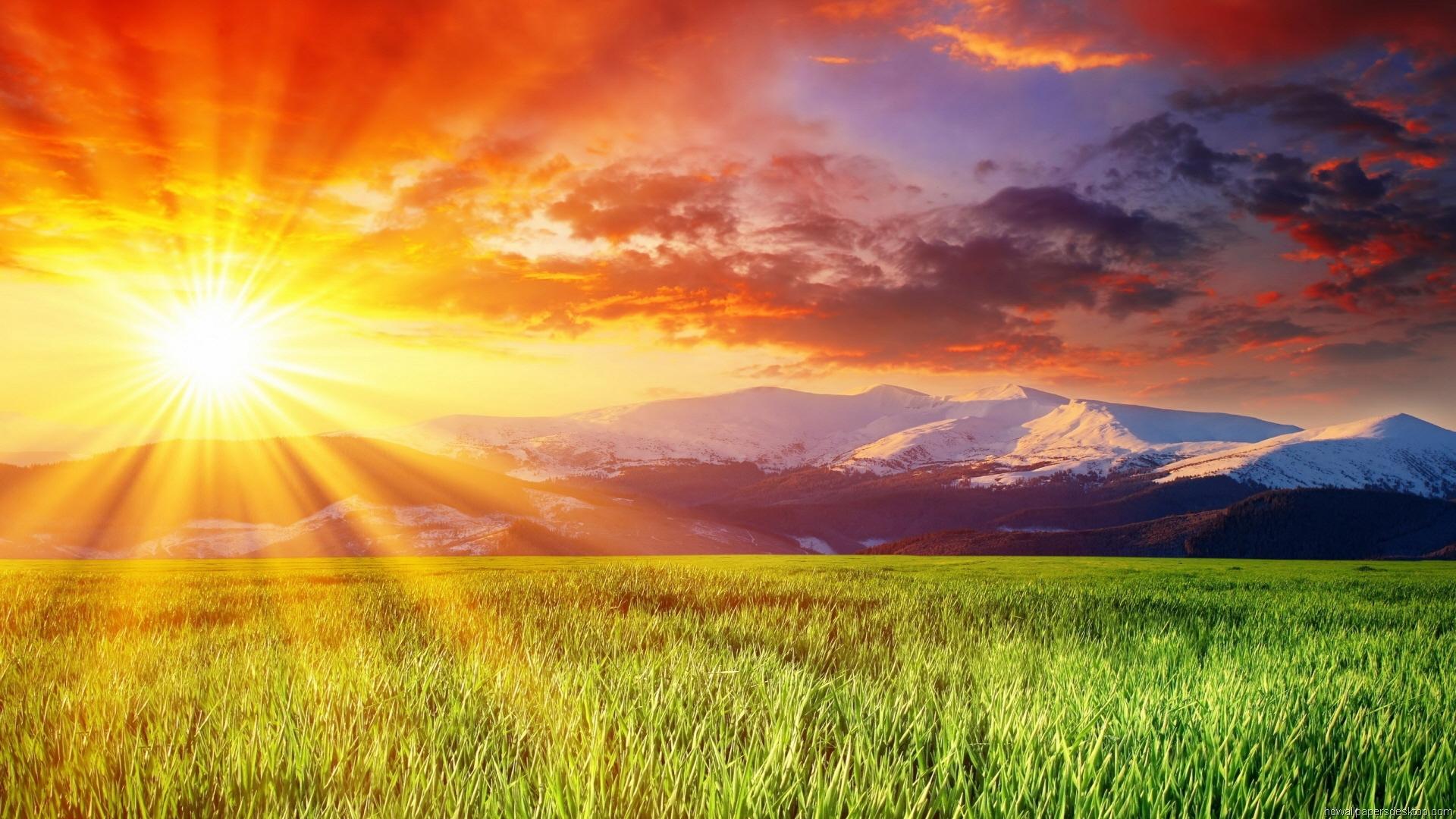 Sunrise Meadow Wallpaper