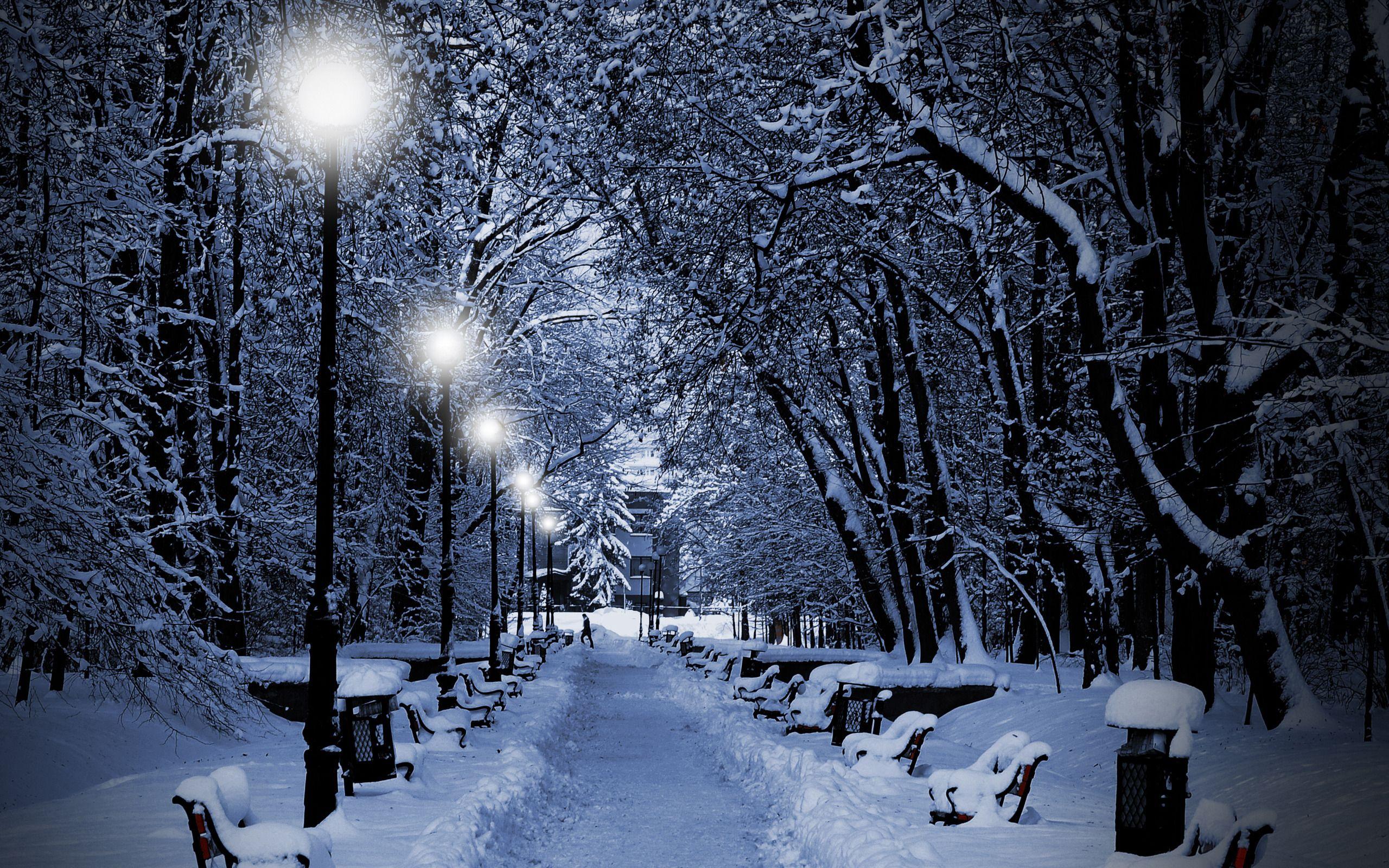 Winter Night Wallpaper wallpaper Winter Night Wallpaper hd wallpaper 2560x1600