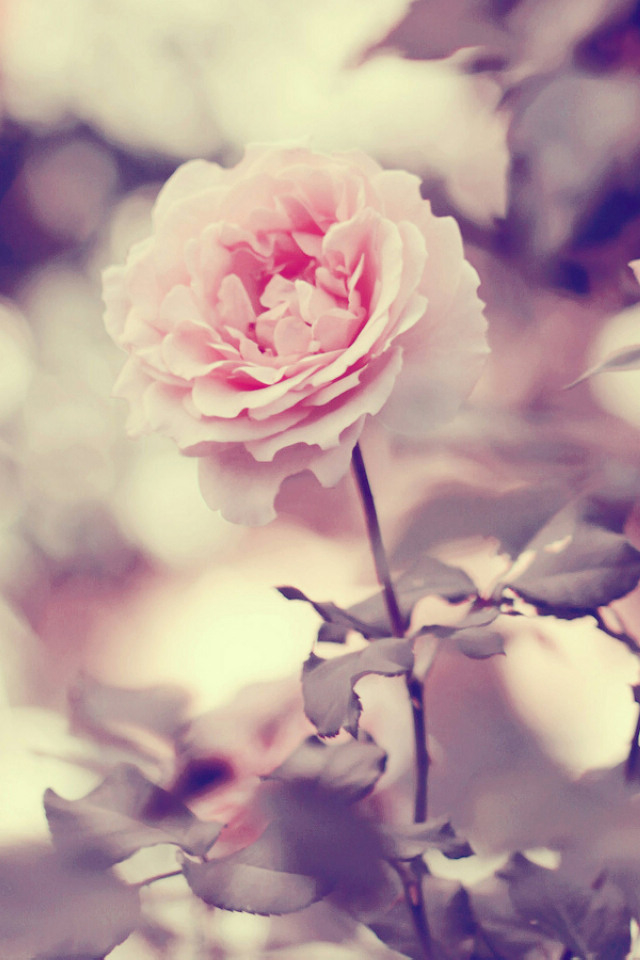 21 Cute Flower Wallpapers Tumblr 640x960