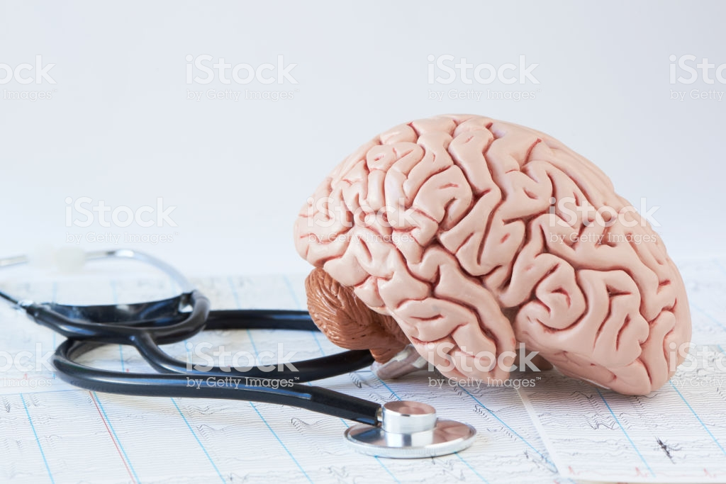 Human Brain Model And Stethoscope On Background Of Brain Waves F 1024x683