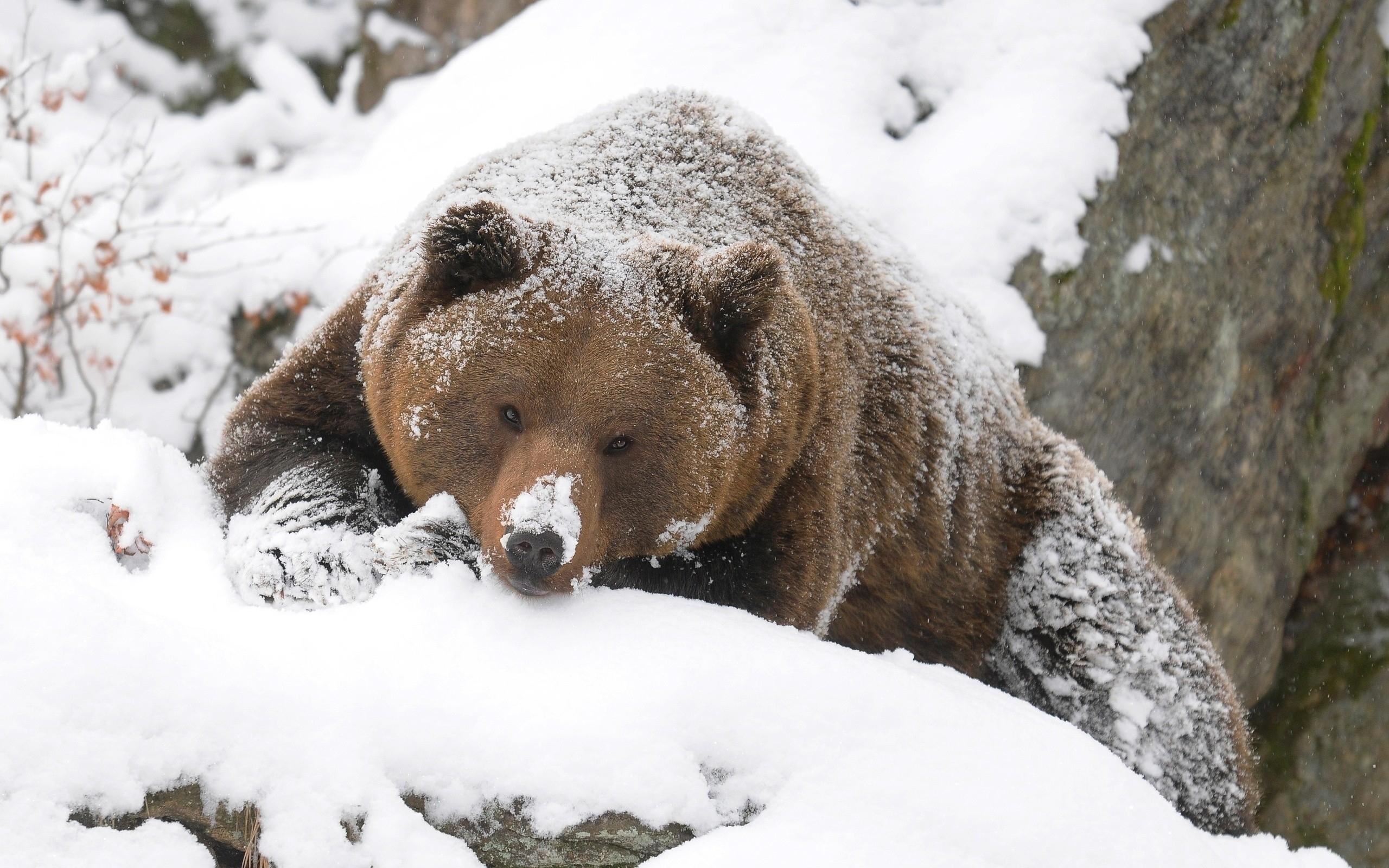 Animals In The Snow Wallpaper Wallpapersafari